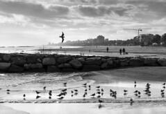 _DSC2146-1 (Giuseppe Cocchieri) Tags: landscape paesaggio seascape sea mare beach spiaggia bw blackwhite blackandwhite bianconero biancoenero street streetphotography