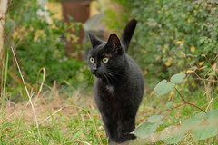 DSCF0047 (Hansjepansjekevertje_) Tags: katten kat cats cat siep