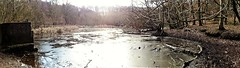 Panoramic of Mere pool frozen over (eucharisto deo) Tags: canock chase staffordshire panoramic panorama aonb ice