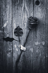 A Toi Mon Amour (Katrina Wright) Tags: dsc3233edit fence dirt bw monochrome rust metal rose sculpted forget memory