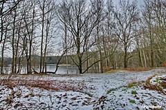Am See (garzer06) Tags: landschaft see baum landschaftsfoto vorpommernrügen landschaftsfotografie mecklenburgvorpommern schnee inselrügen eis