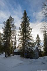 Z19_1282-Edit LT (Zoran Babich) Tags: lapland lappi finland suomi winter snow landscape lainio