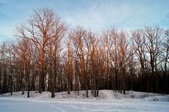Kinsmen Park at dusk (haunted snowfort) Tags: park trees kinsmenpark kinsmen beamsville ontario niagara canada winter snow dusk