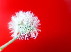 White on red (Christian Chene Tahiti) Tags: téléphone mobile s7e nz flore papeetetahiti rouge blanc minuscule petit macro whatisthat hmm