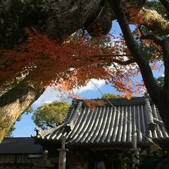 神社の秋 (eyawlk60) Tags: 神社 秋 晩秋 冬 日本 寝屋川 モミジ 美しい 景色 青空 momiji winter autumn neyagawa japan shrine beautiful