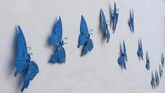 Pared en Níjar (Sakandarra) Tags: mariposas pared andalucía almería níjar azul blanco luz