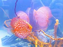 ZOOPark2019 (feel_likeyoudo) Tags: fish rybki woda wather blue niebieski akwarium zoopark aquarium colors
