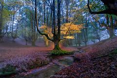 Hayedo de Otzarreta (copelius38) Tags: bosque otzarreta luz light longexposure trees otoño autunm canon6d mountain montaña forest madera rio rive fog niebla