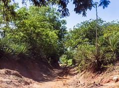 Road to Plage de Ramena / Дорога на пляж Рамена (dmilokt) Tags: природа nature пейзаж landscape лес forest dmilokt