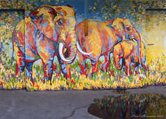 Wall Art (muppet1970) Tags: mural elephant painting wall art puddle reflection colour