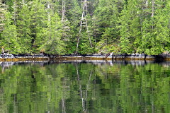 IMG_6475 (Forestplanet) Tags: great bear rainforest 2017