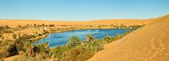 240_F_48140426_KJdQstwJyjt8wuTqowiWbBAkKY1K6d1H (lhoussain) Tags: camel another life sunrise sunset calm relax berber women