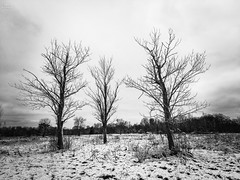 Three Trees (michaelwalker19) Tags: