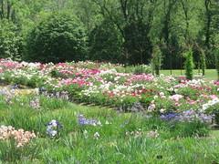 Laking Garden 3 (D. S. Hałas) Tags: halas hałas canada ontario haltonregion wentworthcounty burlington aldershot royalbotanicalgardens botanicalgarden lakinggarden peonies peony