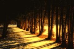 Morning light (prokhorov.victor) Tags: утро природа свет солнце деревья лес тень