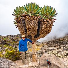_FOU9618.jpg (Murray Foubister) Tags: africa gadventures spring treking tanazania flora travel 2018