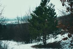 KRIS7467 (Chris.Heart) Tags: túra tél természet winter hiking forest pilis