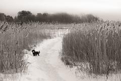 Winter mood, Tønsberg, Norway (KronaPhoto) Tags: 2019 vinter natur nature dog hund pet petlover hundeliv winter coldseason snø snow straw sepia bnw bw norway doglovers
