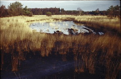 (no49_pierre) Tags: fens marshes 35mm film color corrected super greenomatic rangefinder winter burned soil