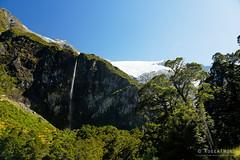 20190207-22-Waterfall from Rob Roy Glacier Track (Roger T Wong) Tags: 2019 nz newzealand robroyglacier rogertwong sel24105g sony24105 sonya7iii sonyalpha7iii sonyfe24105mmf4goss sonyilce7m3 southisland westmatukitukivalley bushwalk glacier hike landscape outdoors tramp trek walk waterfall