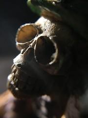 Hard light (Espykrelle) Tags: hardlight macromondays macro theme lumiere light squelette skeleton lightray rayondelumiere