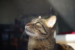 DSC03508 (iocatco) Tags: cat kitten cats sony a7