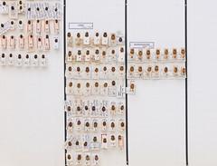 coleoptera-coccinellidae-hippodamia-div-L2-5649 (nmbeinvertebrata) Tags: ccbync nmbe5649 64117 coleoptera coccinellidae hippodamia l2