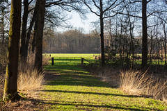 End of the forest path (jan.vd.wolf) Tags: leusden utrecht nederland nl forest bos bomen boom tree landschap landscape