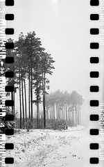 Bronica SQ-A-060-003 (michal kusz) Tags: bronicasqa zenzanon 110 135 35mm 120to135 frame film bw blackandwhite landscape forest format monochrome medium monochromatic trees snow poland