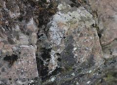 DSC_9288 (jgdav) Tags: ancient quartz pigment rock macro image ochre pictograph america