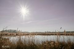Rieselfelder im Sonnenschein (Light and shade by Monika) Tags: rieselfelder sunshine nature water