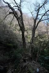 20190320a73_6286 (Gansan00) Tags: lce7m3 α7ⅲ sony japan 大分県 oita 日本 beepu 別府 landscape snaps ブラリ旅 03月 fe24105f4