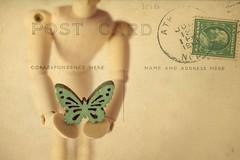 Lepke (Anikó Lázár) Tags: thefirstletterofmysurname closeup texture postcard green artistmannequin artistmanikin wooden butterfly spring macromondays