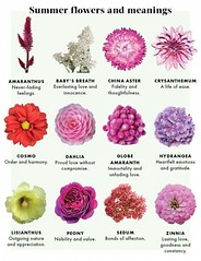 The 21 Secrets That You Shouldn't Know About Flower Meanings Friendship   flower meanings friendship (franklin_randy) Tags: flower meanings meaning friendship tattoo symbolizes devotion that means forever iris japanese lotus what symbolism yellow