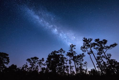 The Milky Way over slash pine trees at Babcock Wildlife Management Area near Punta Gorda, Florida