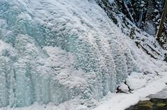 Snowy ice (Bracus Triticum) Tags: snowy ice アルバータ州 alberta canada カナダ 12月 december winter 2018 平成30年 じゅうにがつ 十二月 jūnigatsu 師走 shiwasu priestsrun
