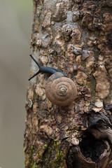 Unidentified black Snail (jimf_29605) Tags: blacksnail chestnutridgeheritagepreserve greenvillecounty southcarolina wildflowers sony a7rii 24240mm