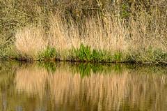 De Woude (sillie_R) Tags: dewoude landscape landschap mirror nederland netherlands noordholland riet spiegel water northholland nl