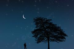 Moonlight Contemplation (Steve Purnell Photography) Tags: moonlight man malefigure tree nighttime starrynight nature silhouette crescent landscape night moonlit moon crescentmoon stars nightsky thoughtprovoking composite modern art