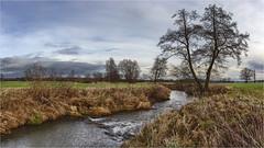Die Zusam (Robbi Metz) Tags: deutschland germany bayern bavaria reischenau augsburgwestlichewälder landscape trees water zusam creek canoneos