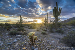 Almost Sunset (doveoggi) Tags: 4135 arizona scottsdale sunset desert saguaro clouds travel southwest usa cholla aoi elitegalleryaoi bestcapturesaoi