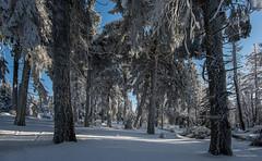 Der Harz - Winterlandschaft (1) (Pana53) Tags: photographedbypana53 pana53 winterlandschaft winterlandscape nationalparkharz brocken gebirge hsb naturundlandschaftsfotografie naturschutzgebiet schnee landscape jahreszeit winter bäume frost nikon nikond810 wald baum himmel sky holz pfad