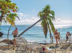 Samana - Dominikanische Republik (Günter Hentschel) Tags: samana domrep dominikanischerepublik bacardiinsel cayolevantado karibik karibikinsel wasser meer atlantik ozean sonne spas schiffe schiff sand urlaub urlaubsbilder traumurlaub hentschel flickr nikon nikond3200 nikoncoolpix palmen people chillen whalwatching wal wale