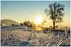 Frozen morning (aviana2) Tags: slovenia cerknica morning fozennature winter aviana2 sonya7ii sony24240mm