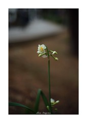 2019/2/8 - 9/9 END. photo by shin ikegami. - SONY ILCE‑7M2 / Lomography New Jupiter 3+ 1.5/50 L39/M (shin ikegami) Tags: asia sony ilce7m2 sonyilce7m2 a7ii 50mm lomography lomoartlens newjupiter3 tokyo sonycamera photo photographer 単焦点 iso800 ndfilter light shadow 自然 nature 玉ボケ bokeh depthoffield naturephotography art photography japan earth