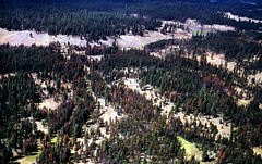 1969. Aerial view of mountain pine beetle damage in lodgepole pine. French Corral, Umatilla National Forest, Oregon. (USDA Forest Service) Tags: usda usfs forestservice foresthealthprotection stateandprivateforestry region6 r6 divisionoftimbermanagement pacificnorthwestregion insectanddiseasecontrol forestinsect foresthealth forestprotection forestentomology pnw mountainpinebeetle lodgepolepine umatillanationalforest oregon frenchcorral aerialphoto aerial photography aerialphotography lowelevation oblique insectdamage treemortality deadtrees barkbeetle 1969