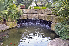 IMG_5610 (Roger Kiefer) Tags: dallas arboretum outdoors beauty nature landscape
