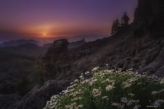 Llegada de la primavera a mi tierra.. ( Gran canaria) (samuelmatossantiago) Tags: landscape montañas sol atardecer paisajes gran canaria islas canarias naturaleza primavera