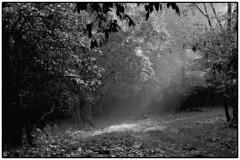 Where the sunlight touches (tsd17) Tags: mono goa india landscape cotigao canon 7dmk11