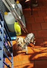 "PERRO ""LEO"" (DAGM4) Tags: perro españa europa europe espagne espanha espagna espana espanya espainia spain spanien 2019 animals animales"